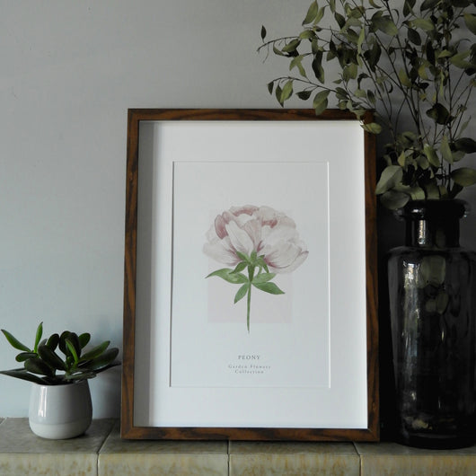 Peony 'Garden Flowers' Collection Watercolour Print