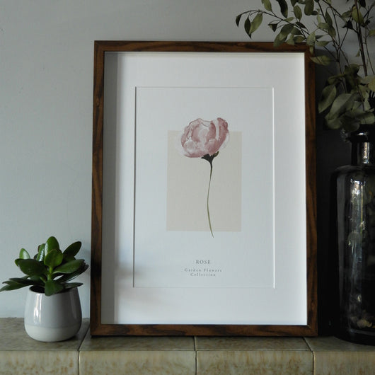 Blush Rose 'Garden Flowers' Collection Watercolour Print