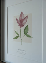 Magnolia 'Garden Flowers' Collection Watercolour Print