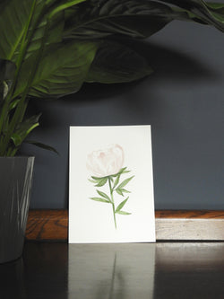 Pink Garden Rose Wall Print for the home