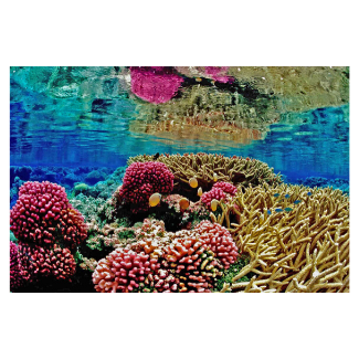 We're giving to Coral Reef Restoration with every sale!