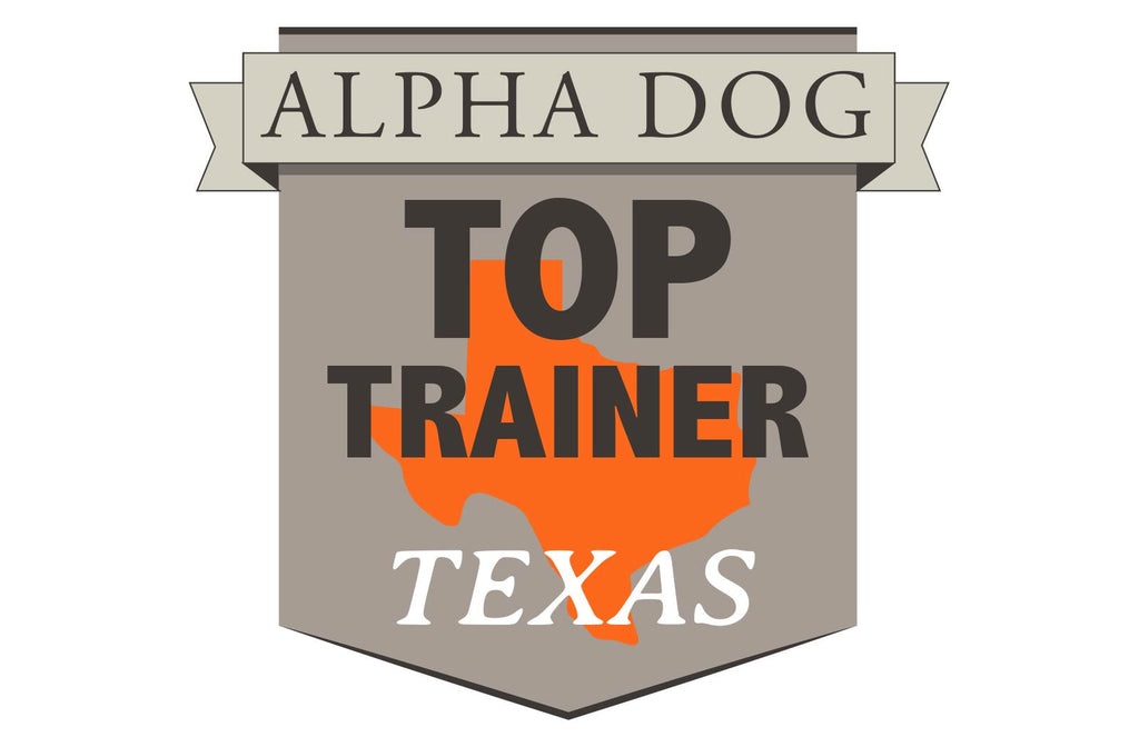 The Top Hunting Dog Trainers in Texas