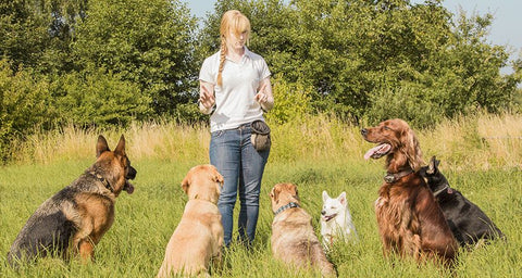 Dog Training Treats for dogs