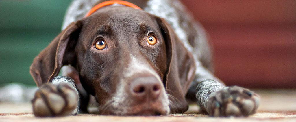 how to use supplements to naturally treat your dog's arthritis