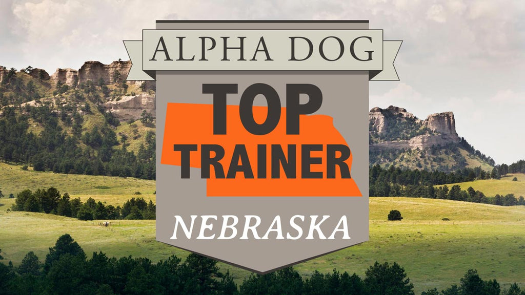 Top Hunting Dog Trainers in Nebraska – Alpha Dog Nutrition