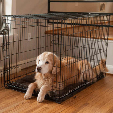 What Size Crate For My Dog