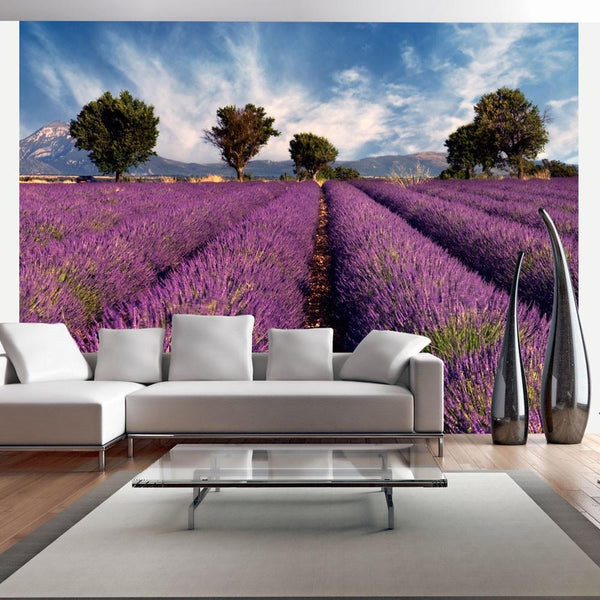 Carta da parati - Lavender field in Provence, France