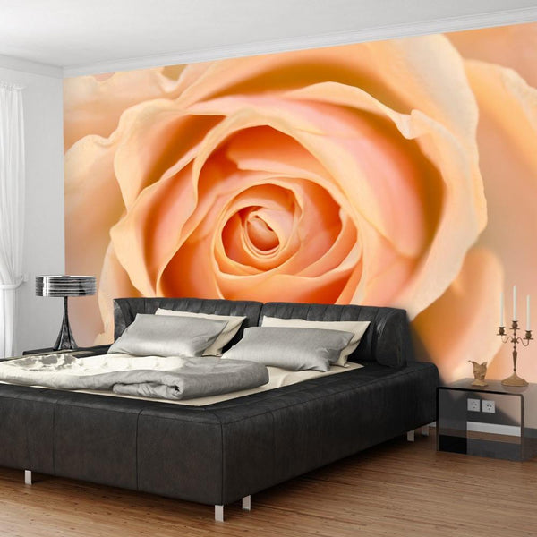 Carta da parati - Peach-colored rose
