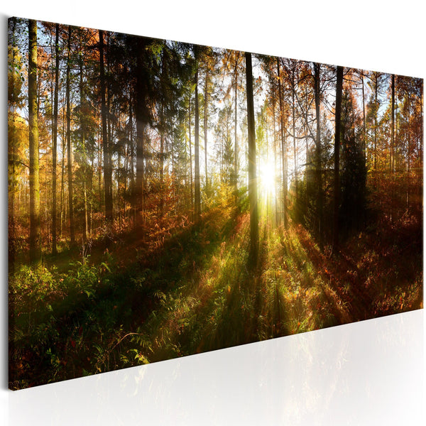 Quadro - Beautiful Forest