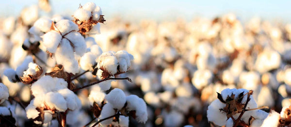 What is Cotton Made of