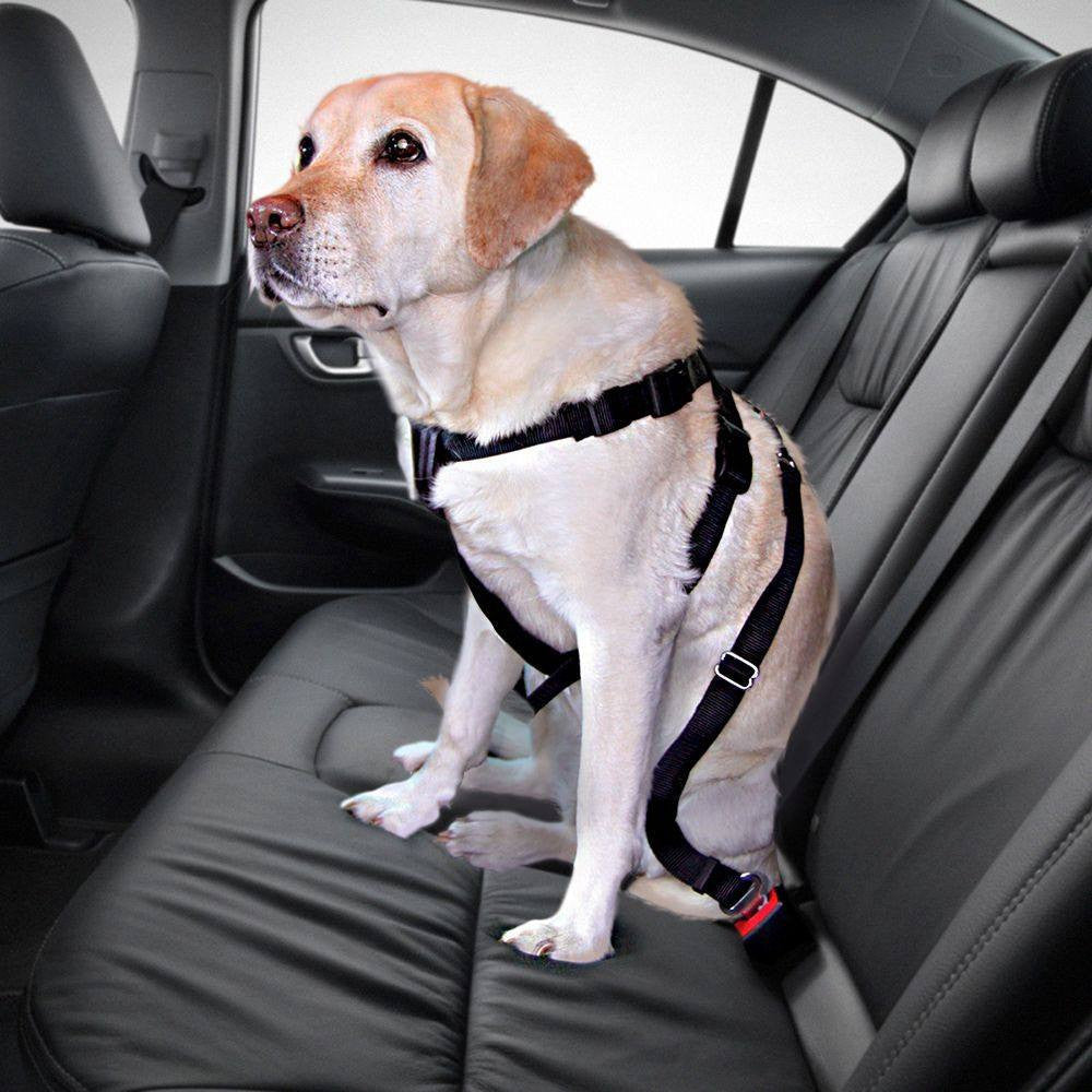 The Universal Car Seat Belt for Pets