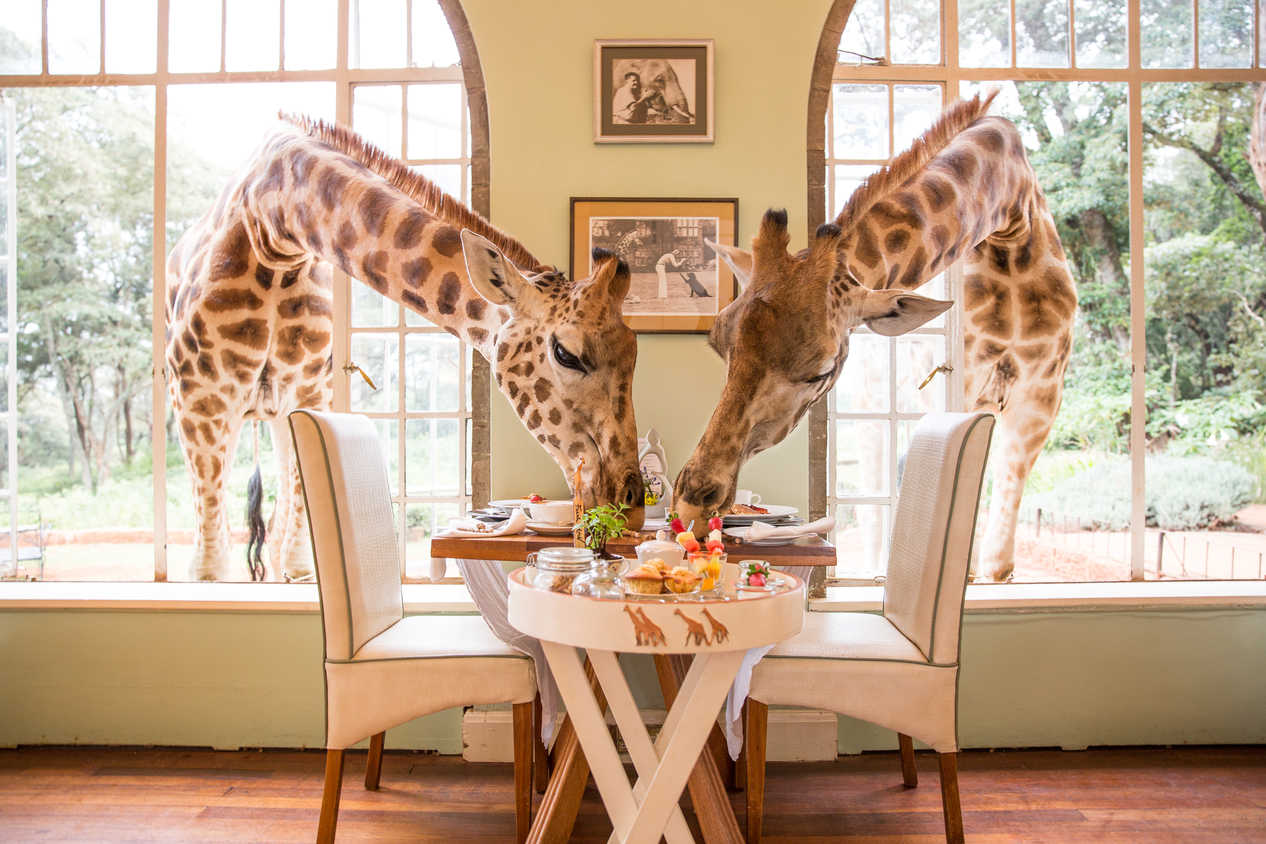 Three Places You Can Have Breakfast With Giraffes