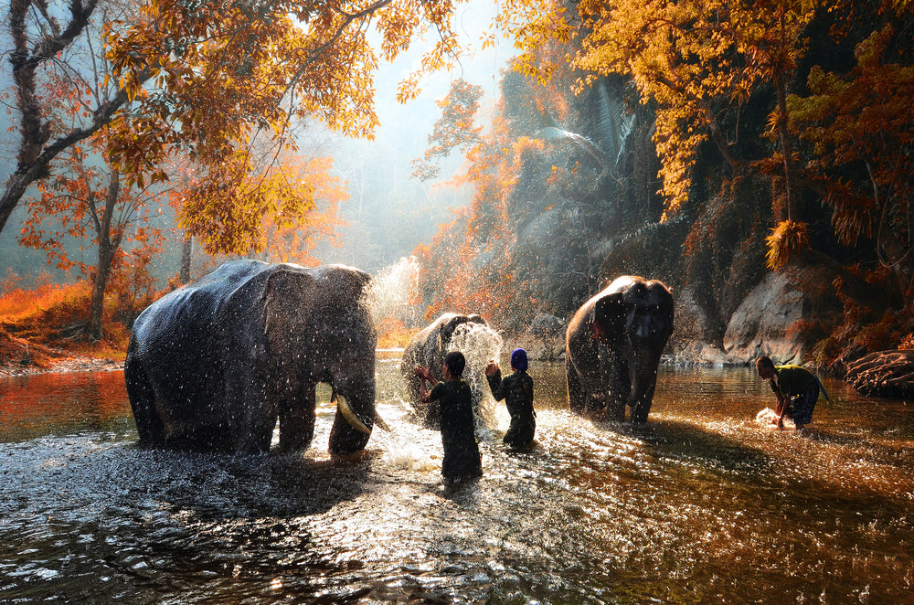 3 Ethical Elephant Sanctuaries to Visit in Thailand