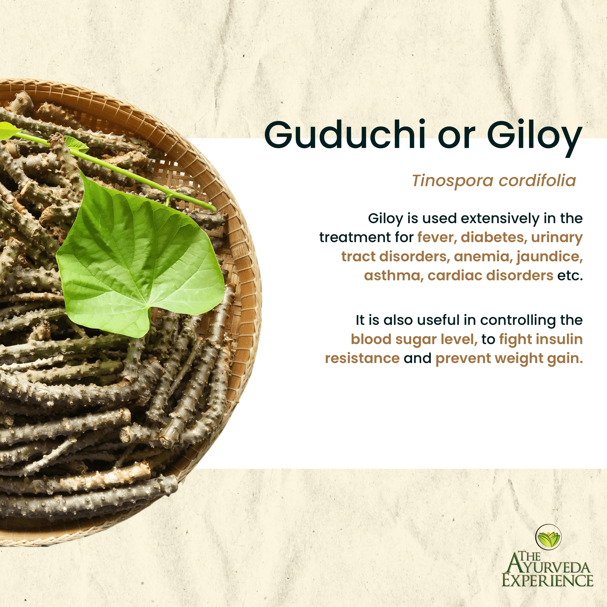 All About Guduchi