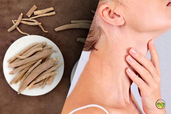 Ashwagandha Thyroid Benefits: Everything You Need To Know