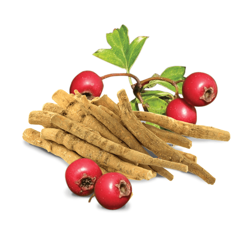 Ashwagandha with different co-drinks