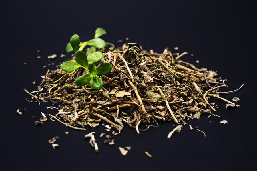 Brahmi: Uses, Benefits, Dosage, Side Effects + Ayurvedic Uses Of Bacopa Monnieri