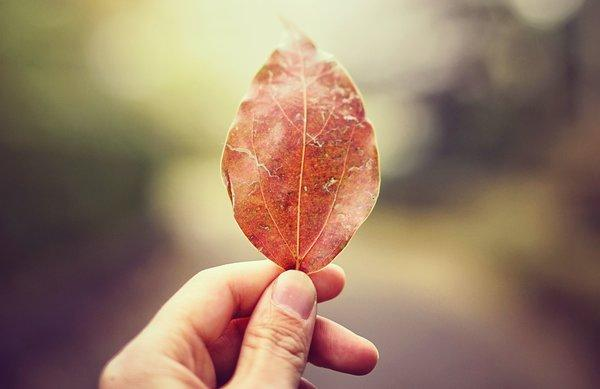 Fall Health And The 5 Elements: How Ayurveda Helps