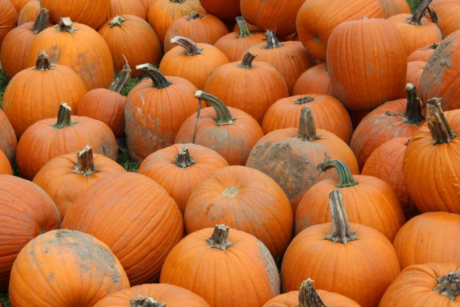 Fall Recipes: 5 Healthy Pumpkin Recipes For Fall