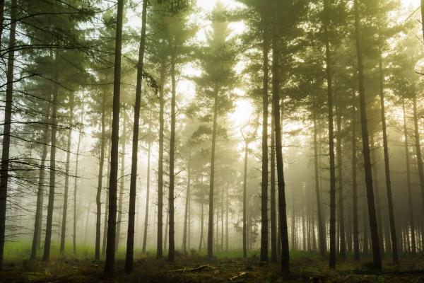 Forest Bathing + Ayurvedic Rasayana Therapy