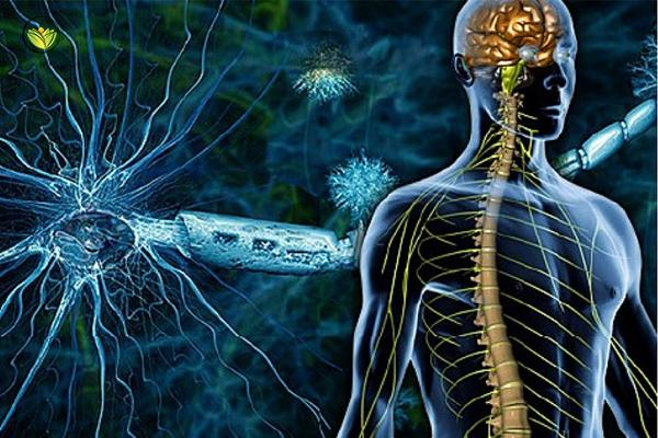 Multiple Sclerosis Symptoms, Treatment, Causes And Ayurvedic Treatment