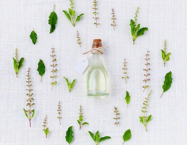 Tulsi (Holy Basil): Tulsi Benefits, Uses, Research