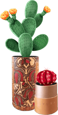 Drive household utility with attractive DIY coasters for casual beverages or pots for indoor plants