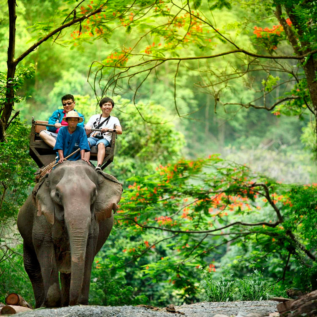 Animal Tourist Attractions to Avoid While on Vacation