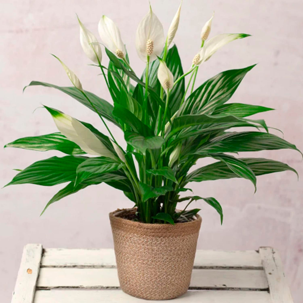 Color Your Winter: Beautiful Houseplants to Keep the Light Shining