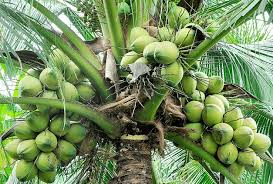 Coconuts for an Eco-World