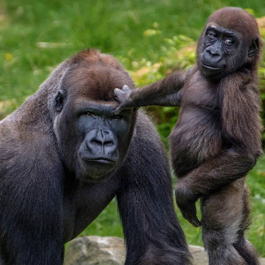 Father's Day 2019: 3 Amazing Animal Dads