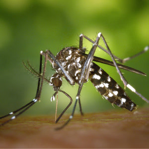 3 Holistic Mosquito Repellents