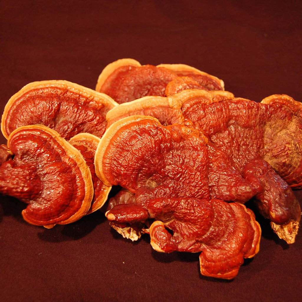 The Magic of Reishi Mushrooms
