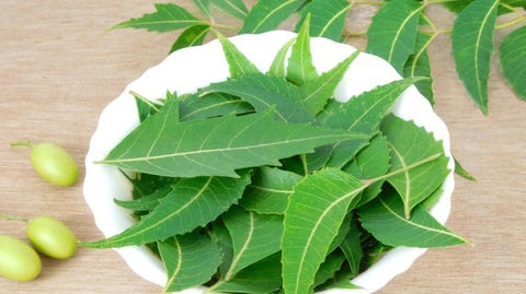 neem tree oil pesticide organic