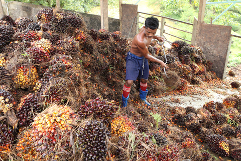 palm oil worker