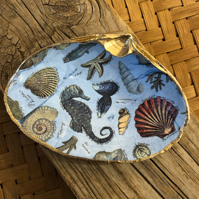 Large Sea Life Surf Clam Shell Dish