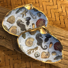 Sea Life Surf Clam Shell Dish