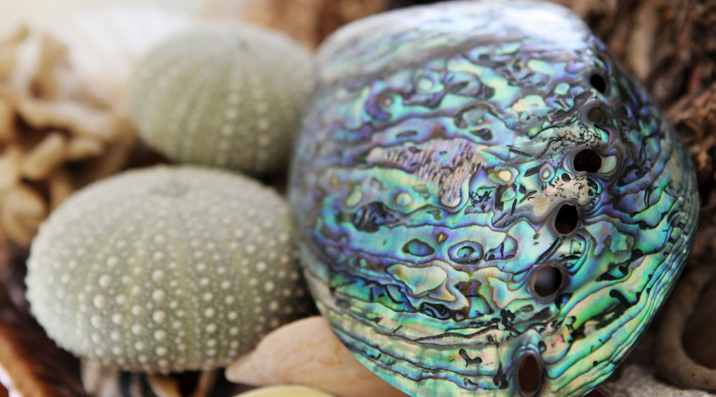 Jewelry and Health: The Benefits and Healing Qualities of Abalone