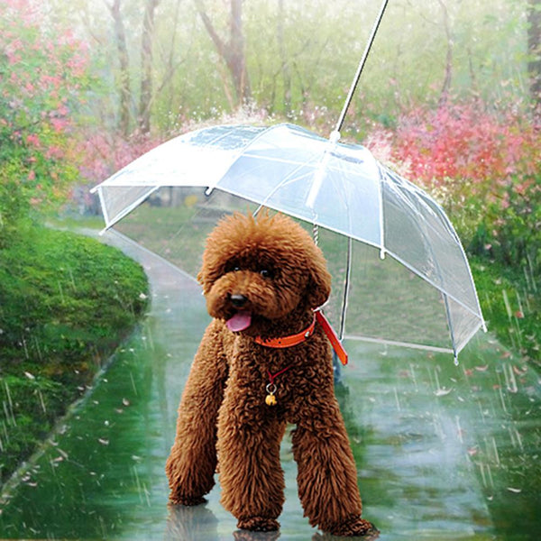 DOGGYBRELLA - The Built-in Umbrella Leash - GottaHaveNow.com