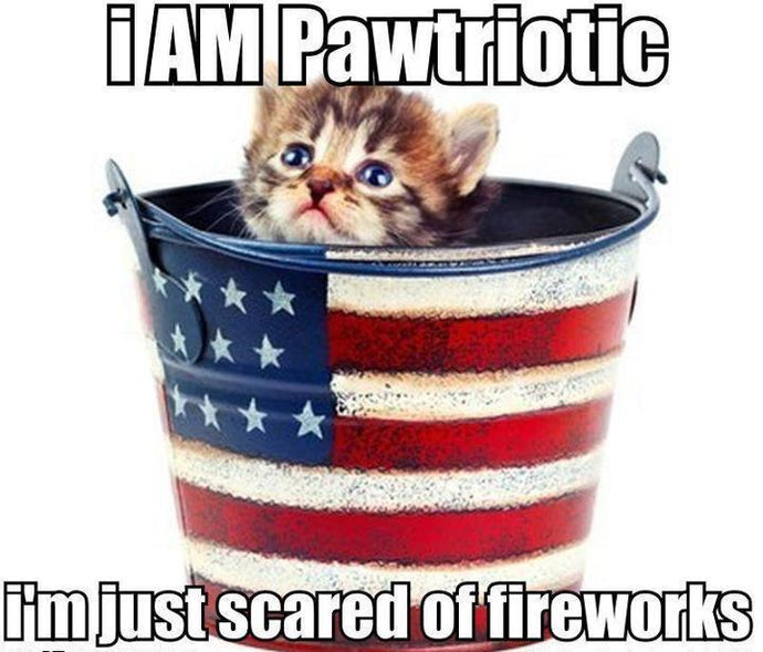 5 Helpful Tips to Keep Your Cat Safe on the 4th of July