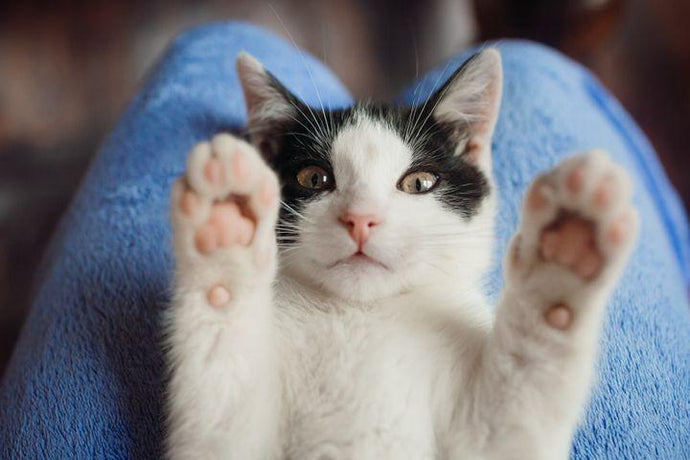 City The Kitty On Cat Declawing and Prevention