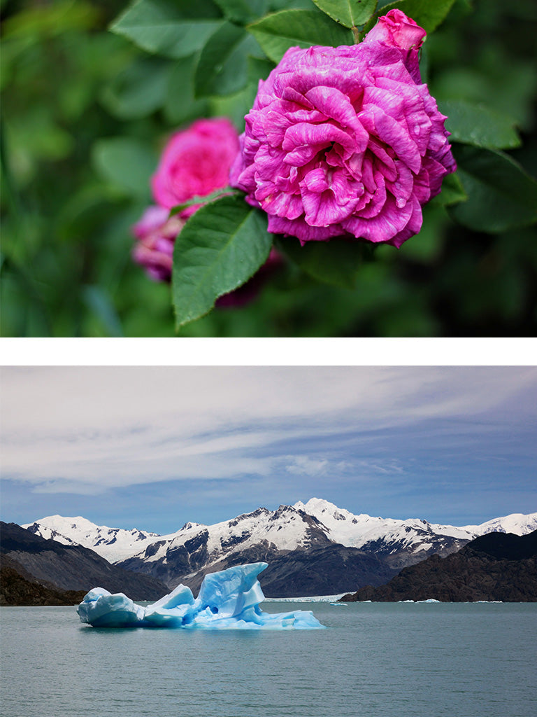flower and iceberg