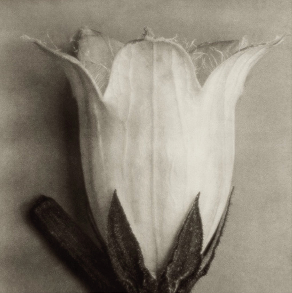 WHAT'S ON: Karl Blossfeldt Photographic Exhibition
