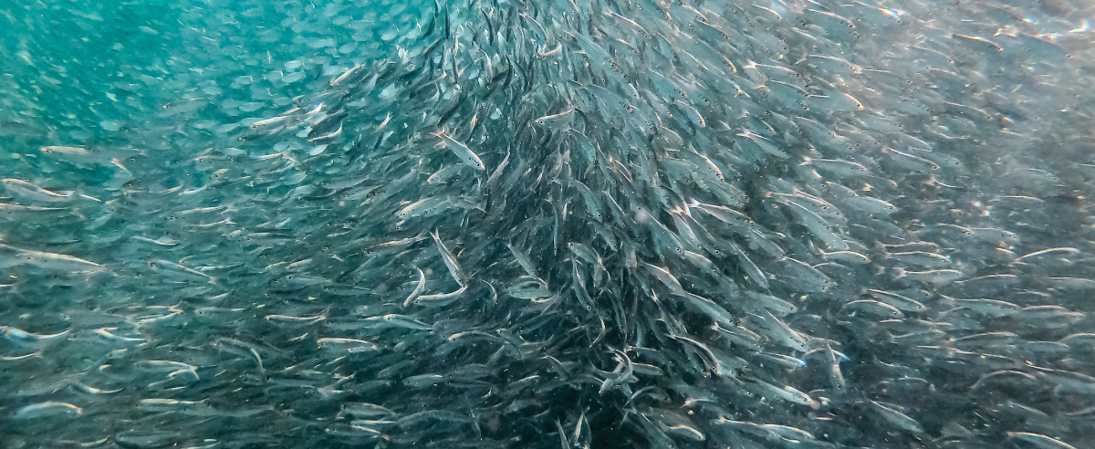 Marine Collagen Fish