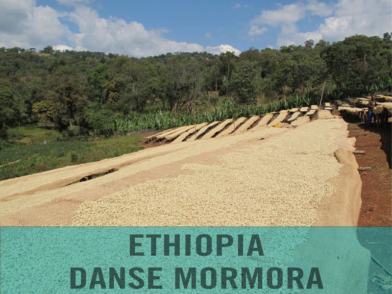 Ethiopia—Guji Danse Mormora ($4.75/lb) Green Coffee Mill47 Coffee