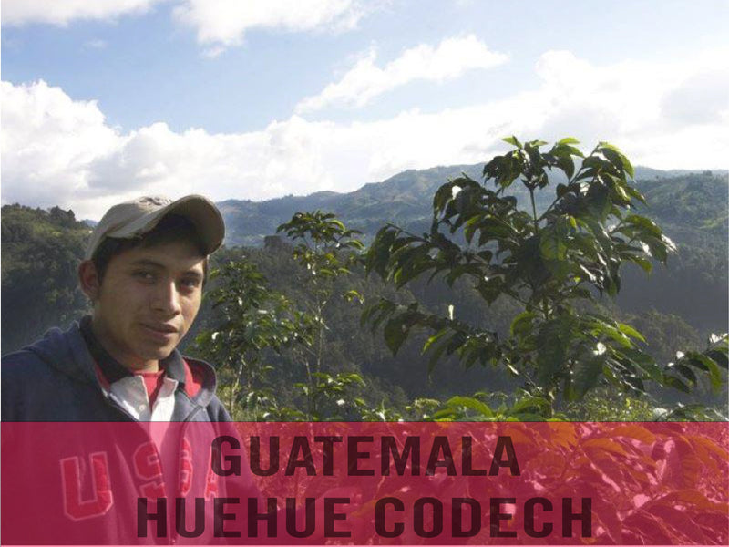 Guatemala—Huehue CODECH Micro Lot ($5.35/lb) Green Coffee Mill47 Coffee