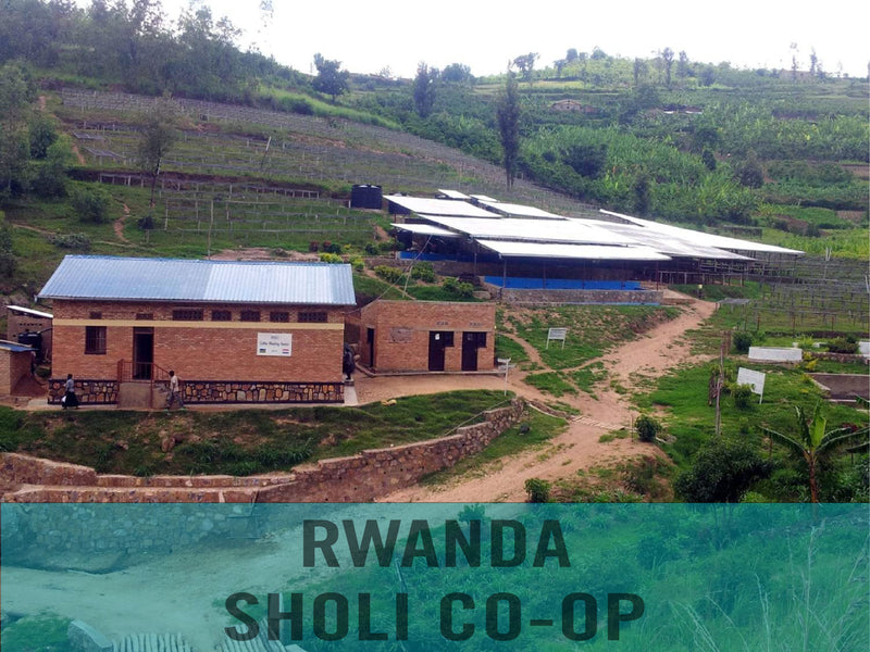 Rwanda—Sholi Women's Co-op ($5.20/lb) Green Coffee Mill47 Coffee