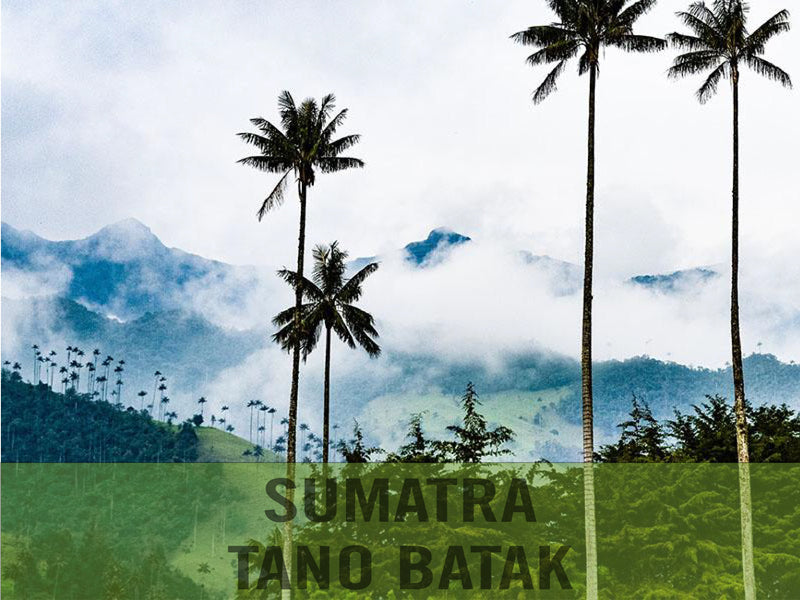 Sumatra — Tano Batak Lintong ($6.50/lb) Green Coffee Mill47 Coffee