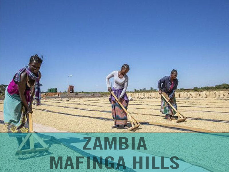 Zambia—Mafinga Hills ($4.75/lb) Green Coffee Mill47 Coffee