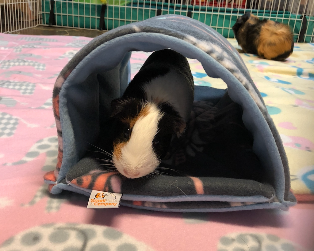 Guinea Pig Tunnel | Feathers on Gray